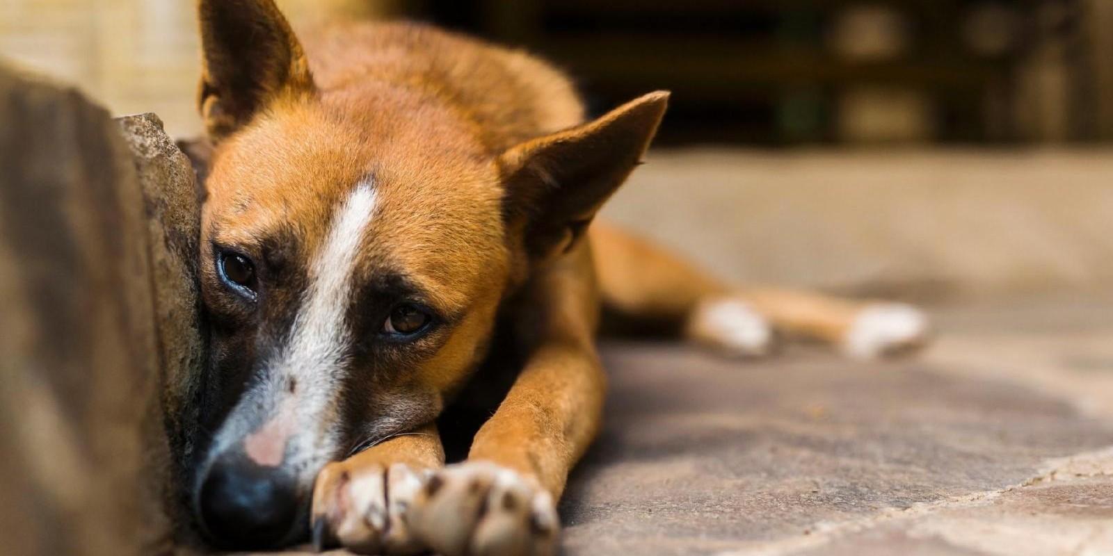 A 'Epidemia De Abandono' Dos Animais De Estimação Na Crise Do Coronavírus