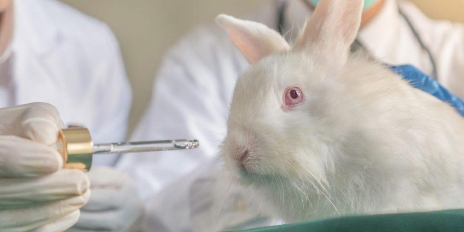 Em Busca Do Fim Do Uso De Animais Em Testes Cosméticos