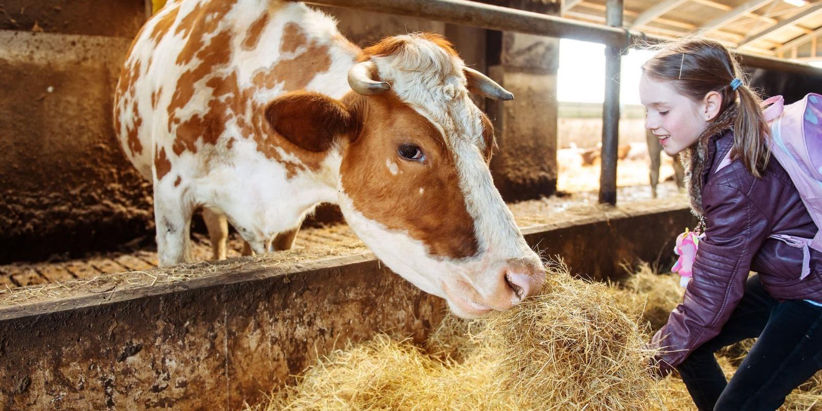 Igualdade Para Os Animais: Especismo E Sofrimento Animal Sob A Perspectiva Utilitarista Singeriana