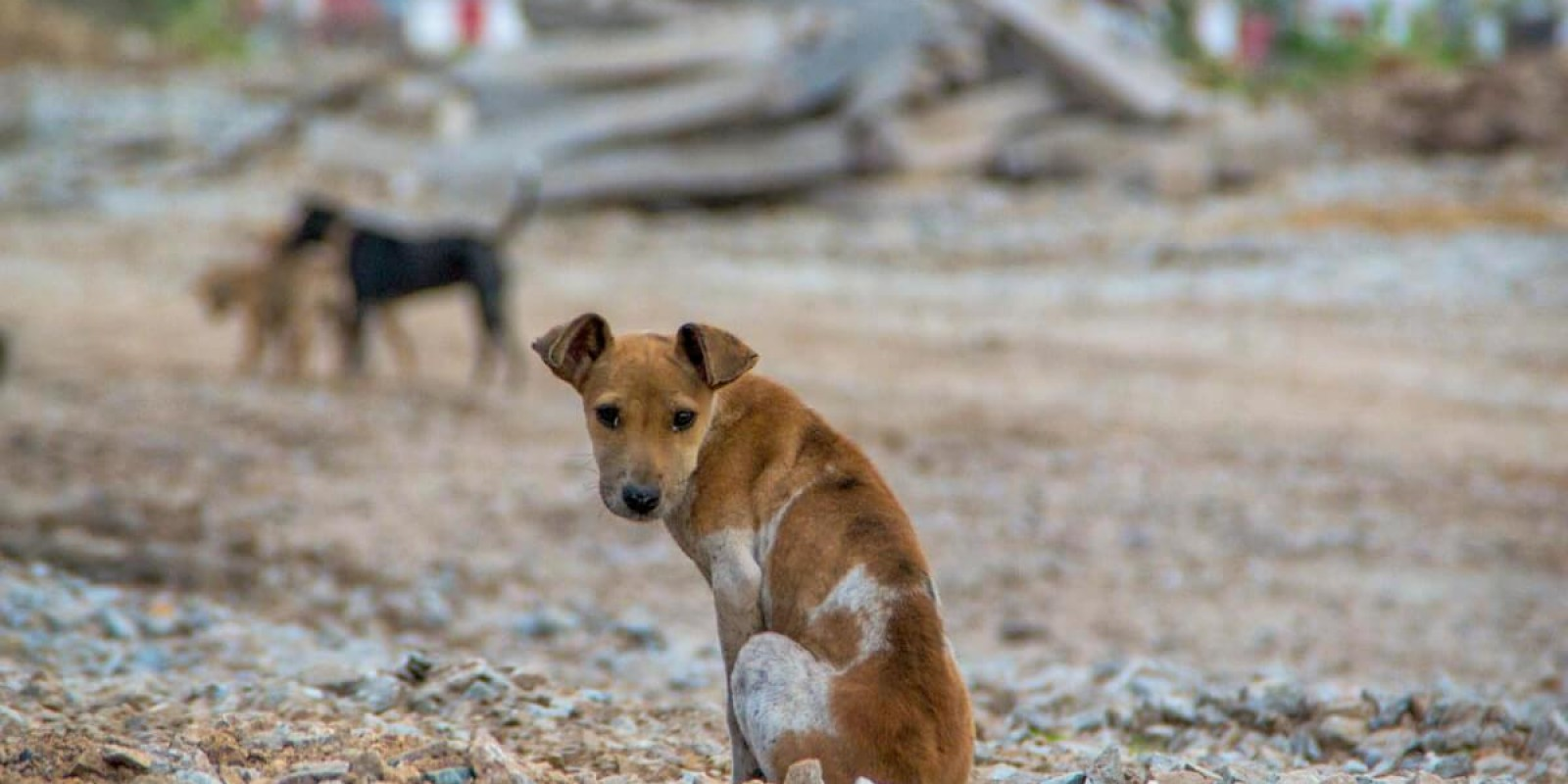 Conheça campanhas sobre a adoção de animais
