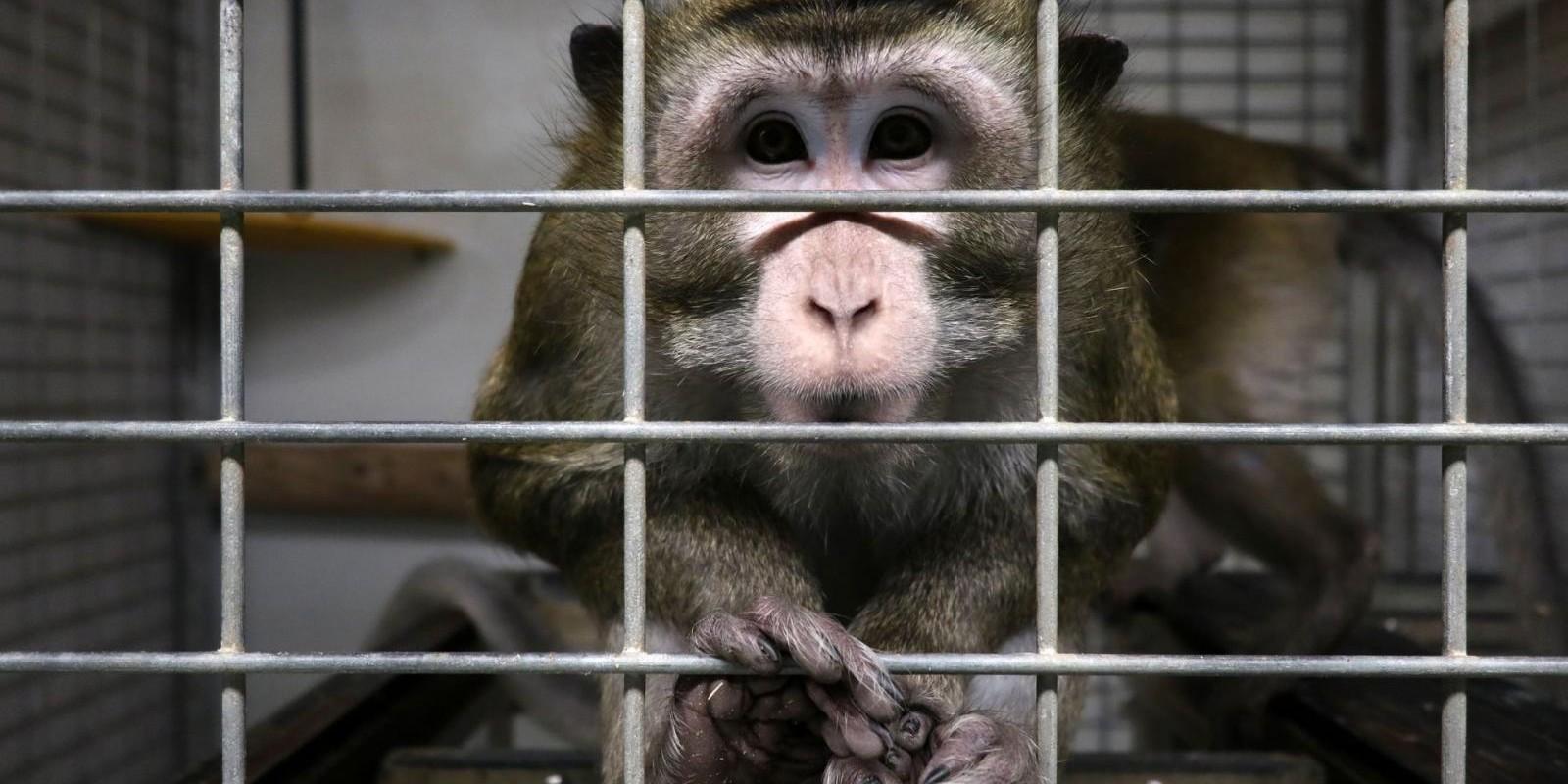 Estamos preocupados com os animais de laboratório?
