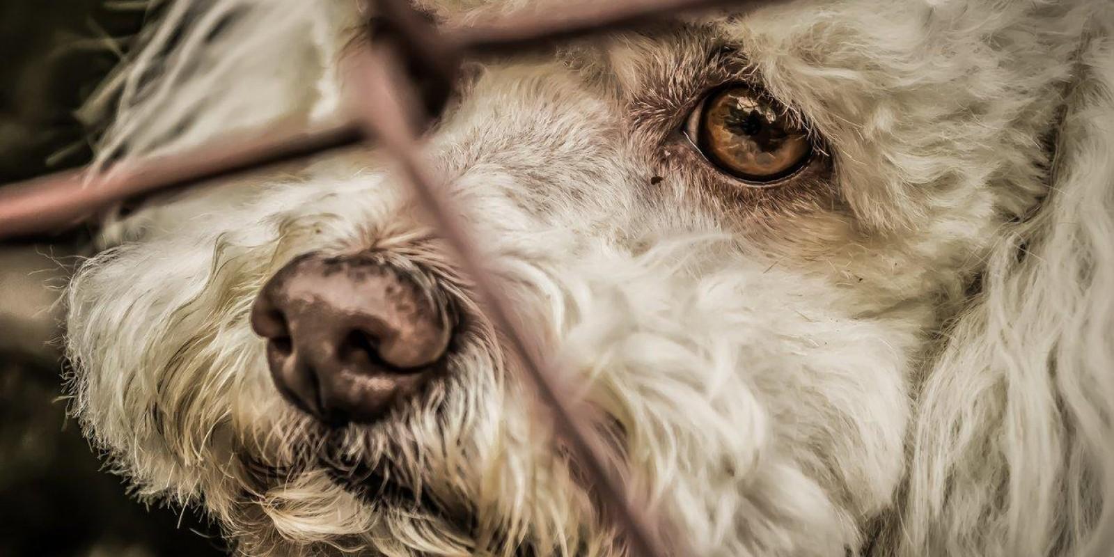 Os direitos dos animais no Brasil e as medidas para combater os maus-tratos